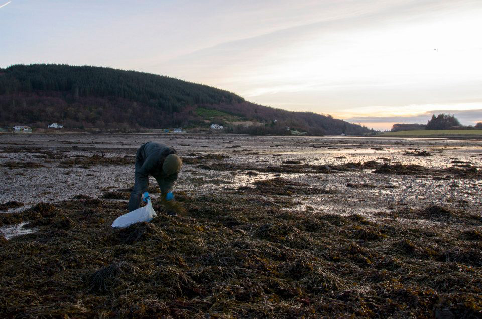 Bruce Seaweed Picking